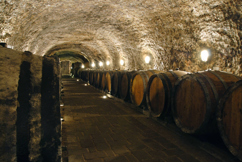 Montserrat & Codorniu Wine Cellars: 6-Hour Guided Tour