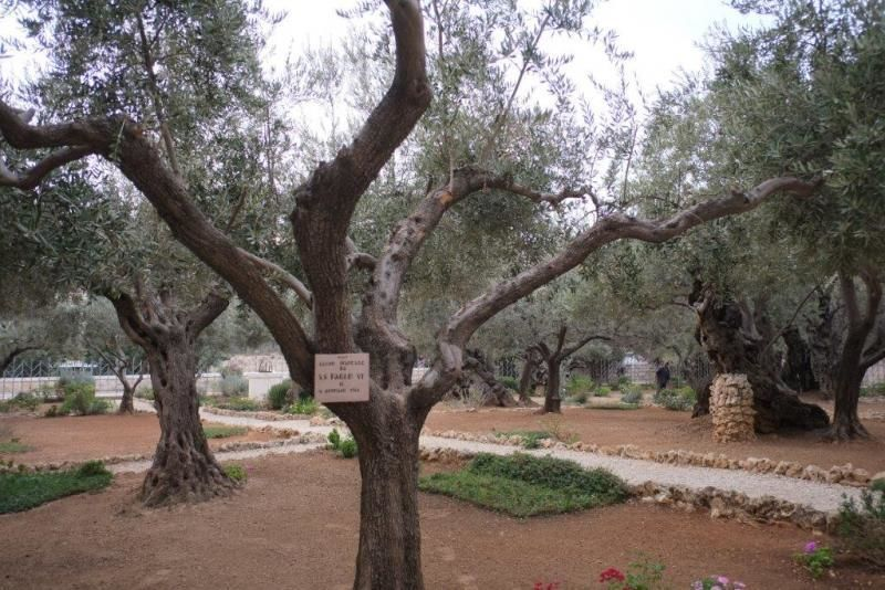 Day trip to the religious places in Jerusalem with a private guide