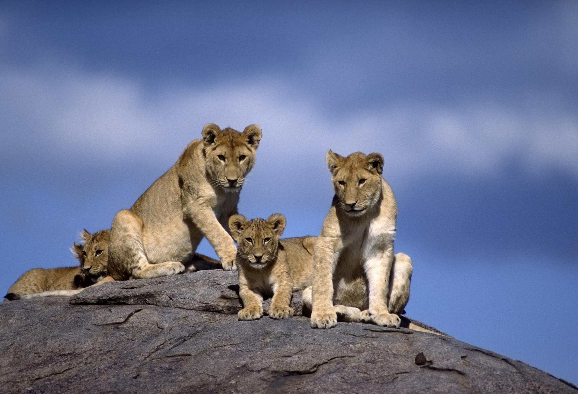 1 Night / 2Days Amboseli National Park Safari from Nairobi