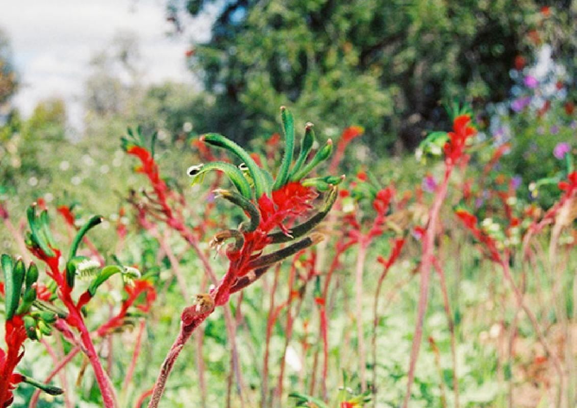 Perth Wildflower Sightseeing Tour with Hotel Pick-up