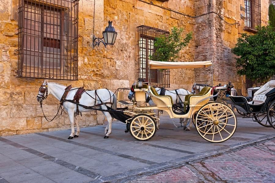 Cordoba Full Day with High Speed Train from Madrid