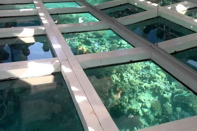 Glass Bottom Boat Tour from Sharm El Sheikh