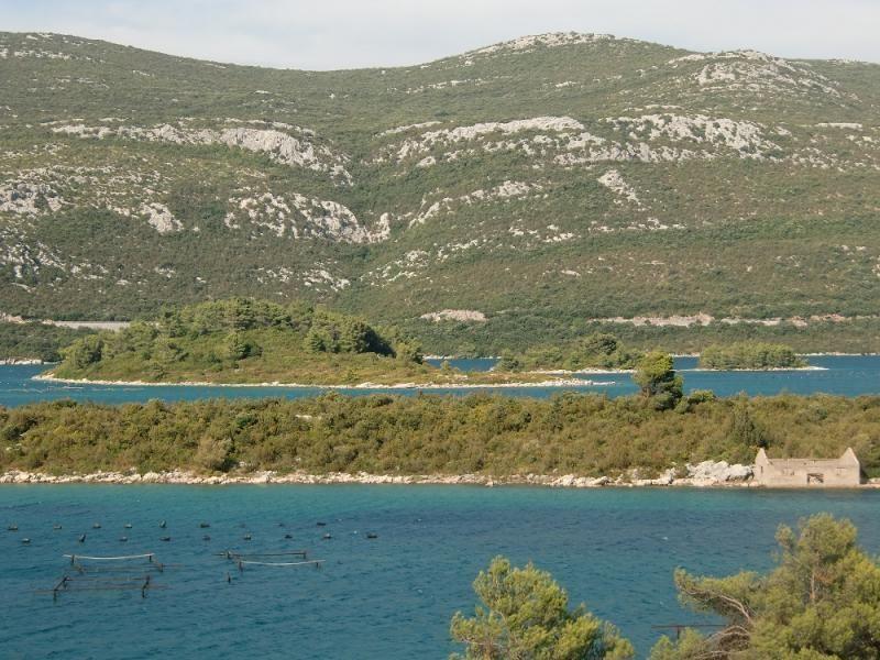 Private trip to Trsteno, Ston and Peljesac peninsula