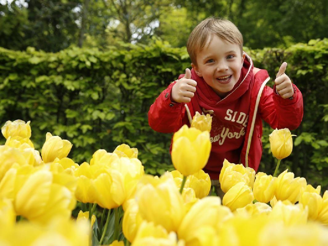 Keukenhof Gardens Fast-track Ticket & Tulip Fields Day Tour from Amsterdam