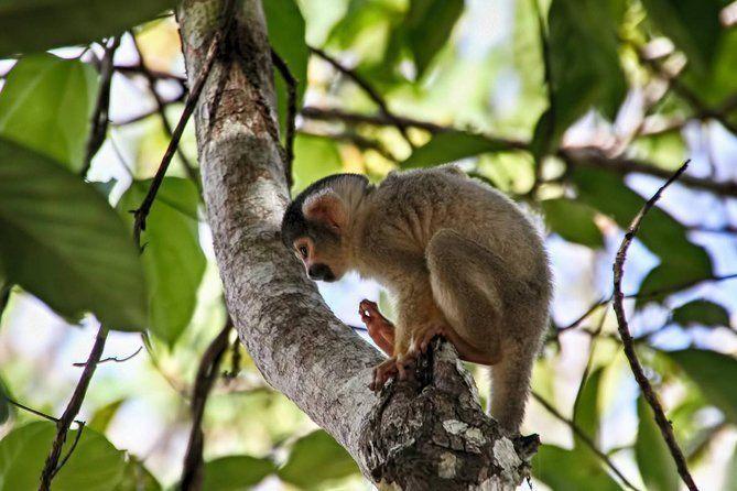 3 days 2 nights - Tambopata Jungle