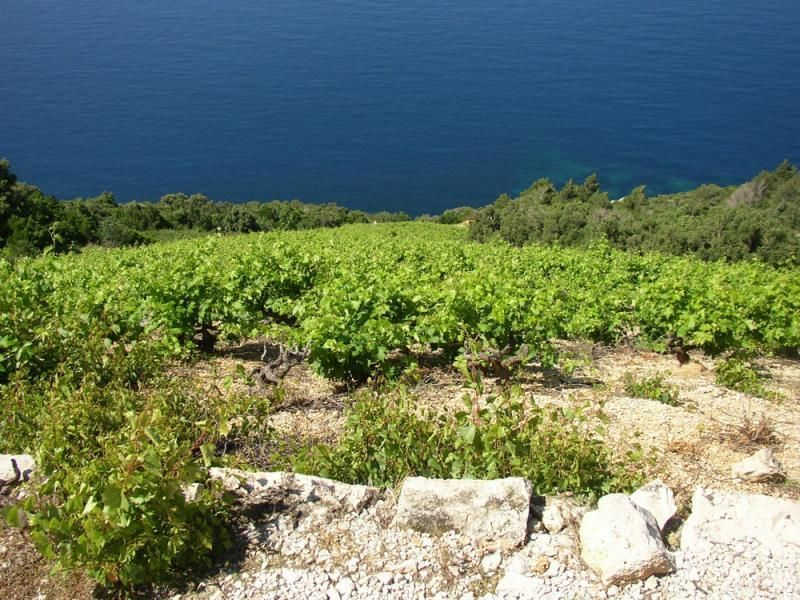 Day trip Pelješac - wine tour (private tour)