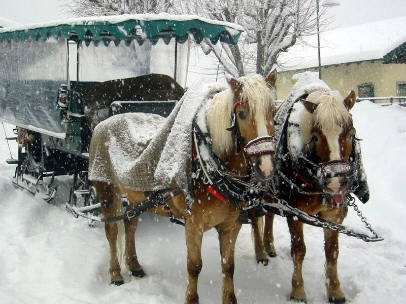 Horse drawn Sleigh Ride in Ramsau