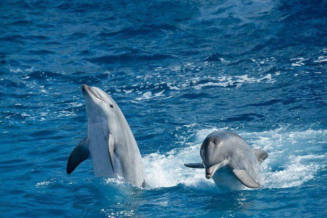 Overnight Snorkeling Trip At Satayh Dolphin Reef From Marsa alam