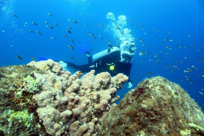 Cabo San Lucas 2 Tank Dive - Certified Only