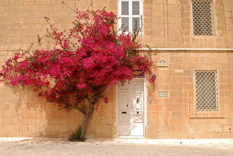 Mdina - Full day excursion