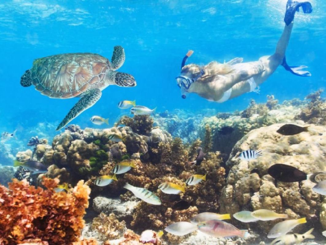 Green Island and Great Barrier Reef Cruise with Helicopter Flight Option