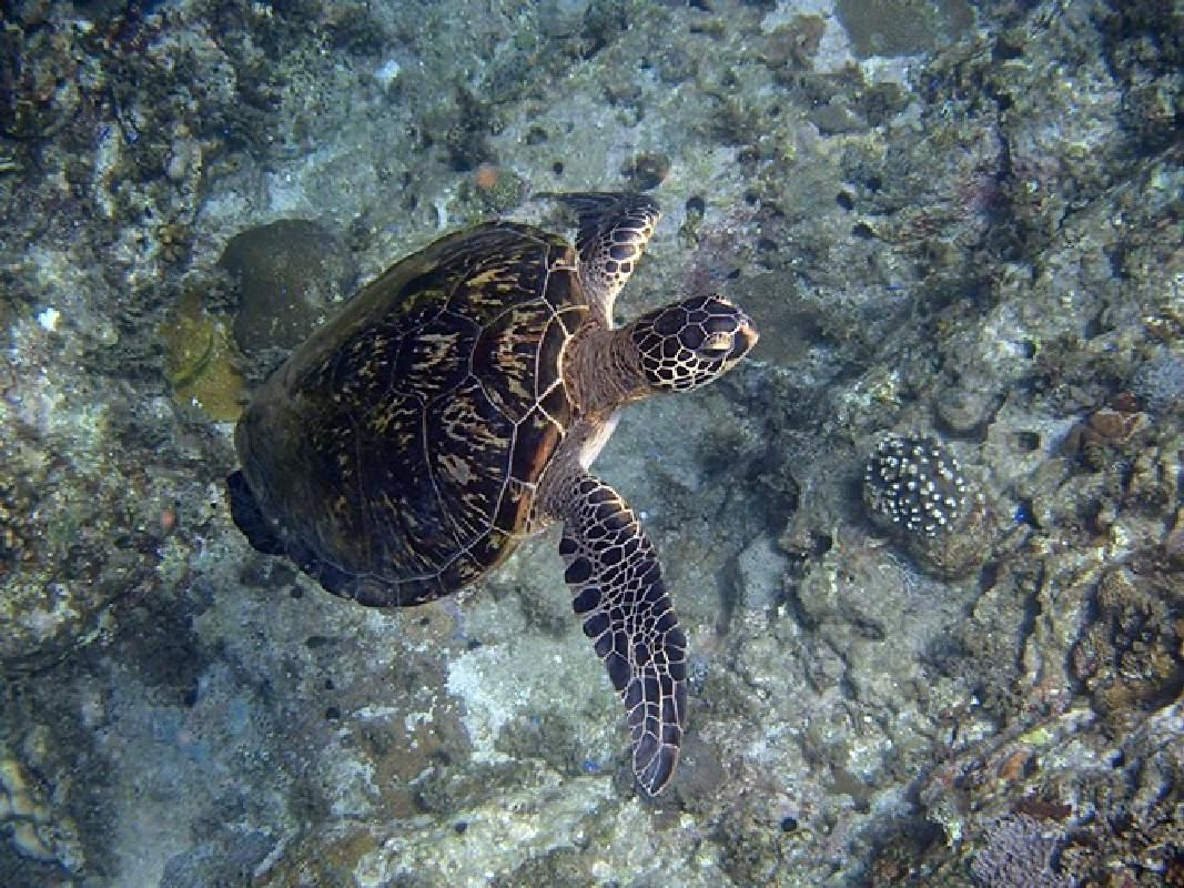 Scuba Diving Tour for Licensed Divers in the Sea of Yakushima