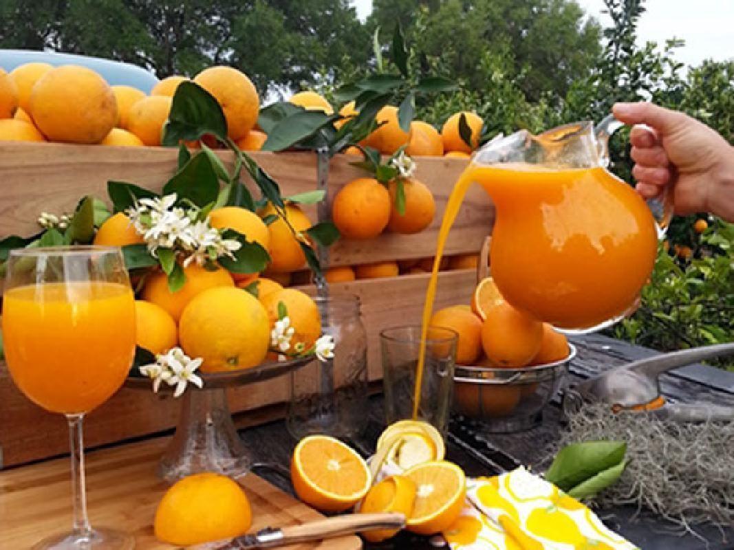 Everglades Airboat Ride & Monster Truck Orange Plantation Tour