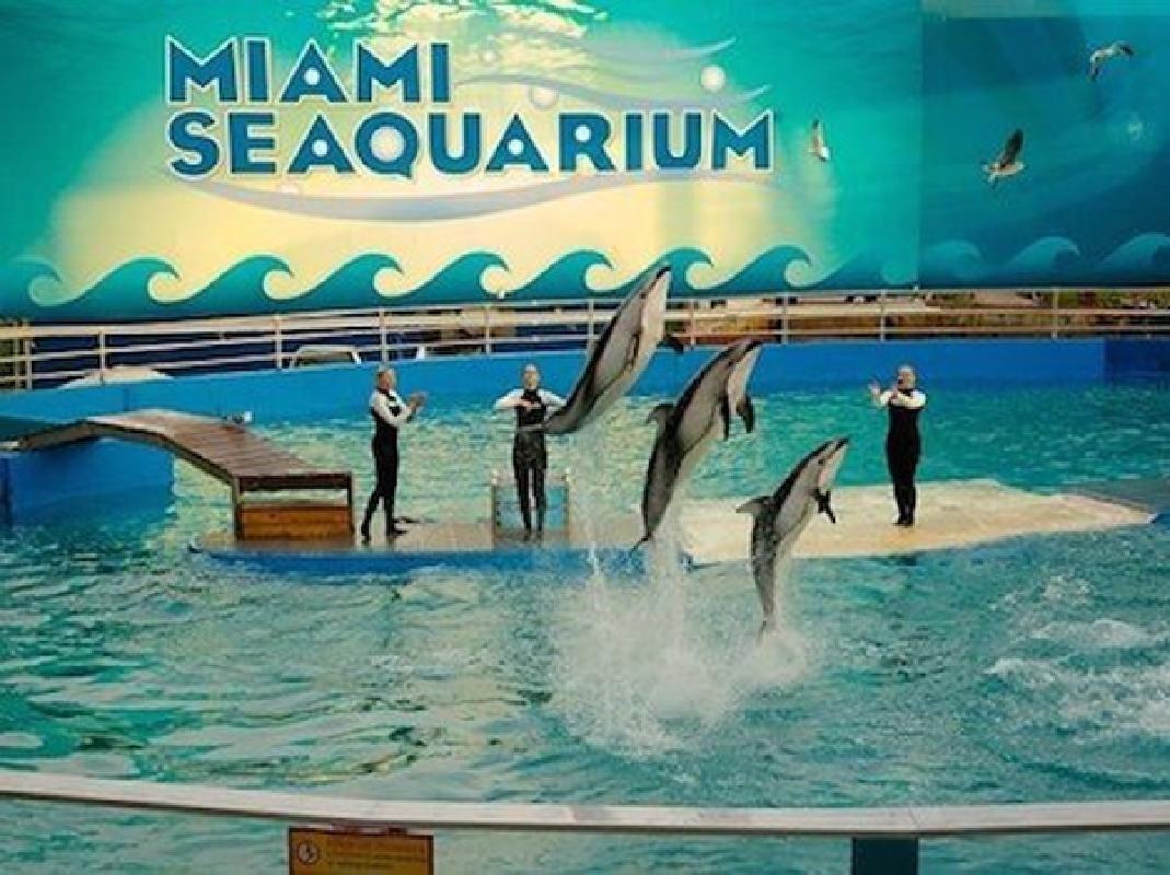 Miami Seaquarium Admission & Double Decker Bus Transportation
