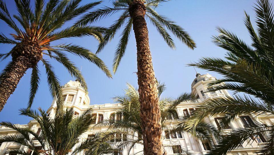 From Benidorm: Best of Alicante & Elche Private Tour