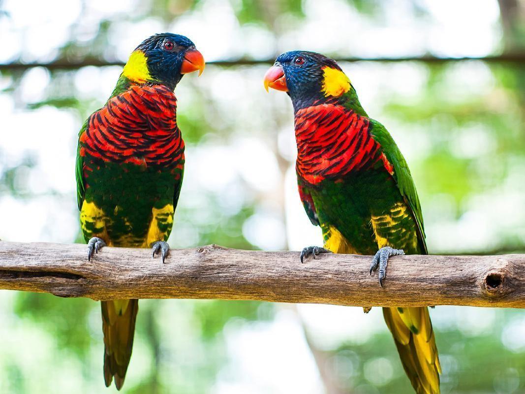 Kuala Lumpur Half Day Nature and Wildlife Tour