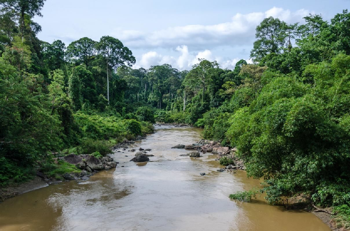 Danum Valley Rainforest 3 Day Guided Tour from Lahad Datu