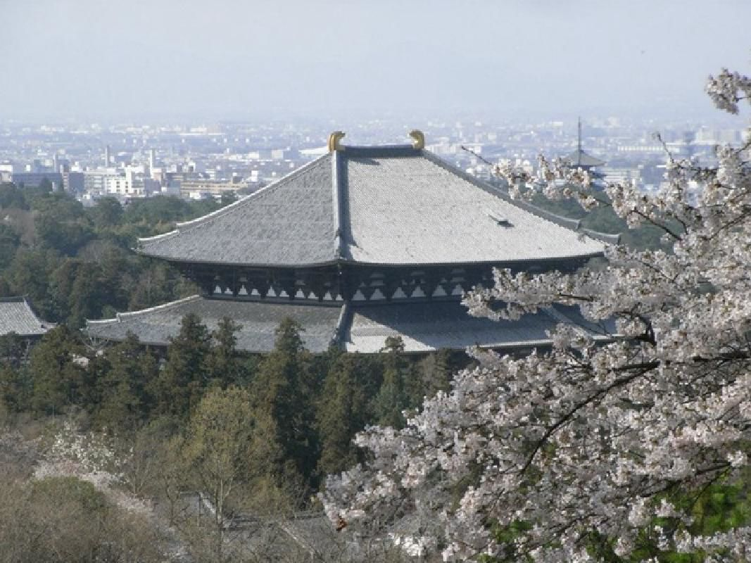 Six Hour Sightseeing Taxi Tour of Historic Temples and Castle Ruins in Nara