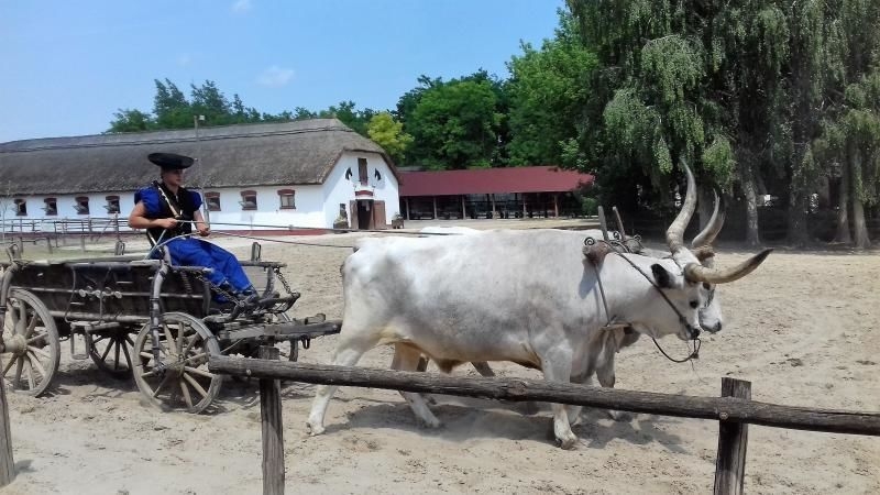 Excursion Budapest - Puszta horse show in Lajosmizse