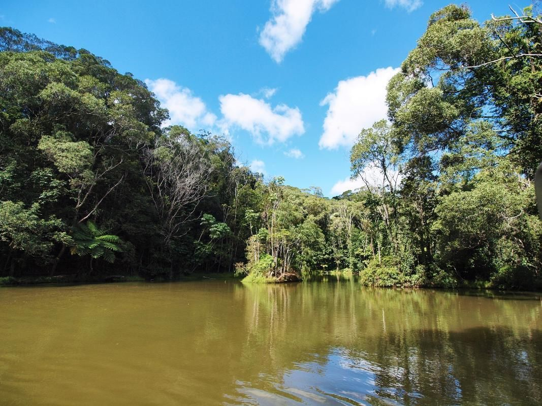 Rainforestation Nature Park Tour by Amphibious Army Duck