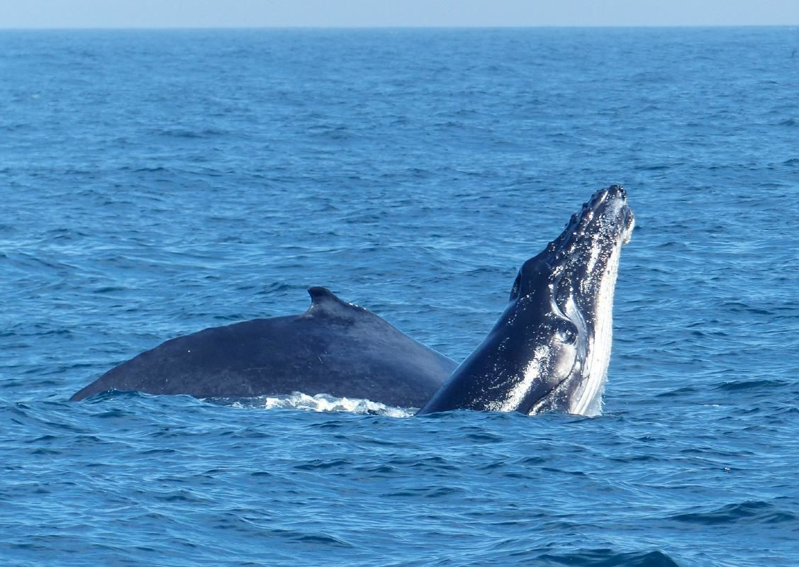Sydney Harbour Whale Watching Cruise with Breakfast or Aussie BBQ Lunch