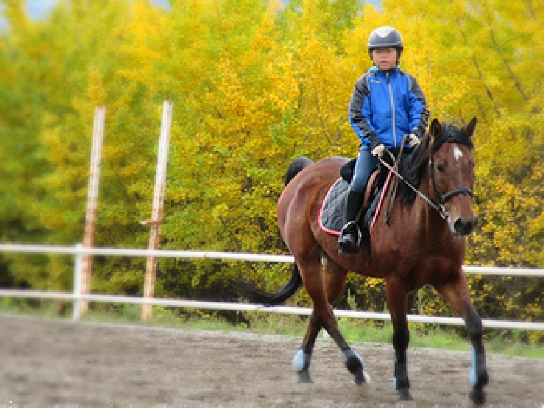 Horse Back Riding Lesson in Minakami