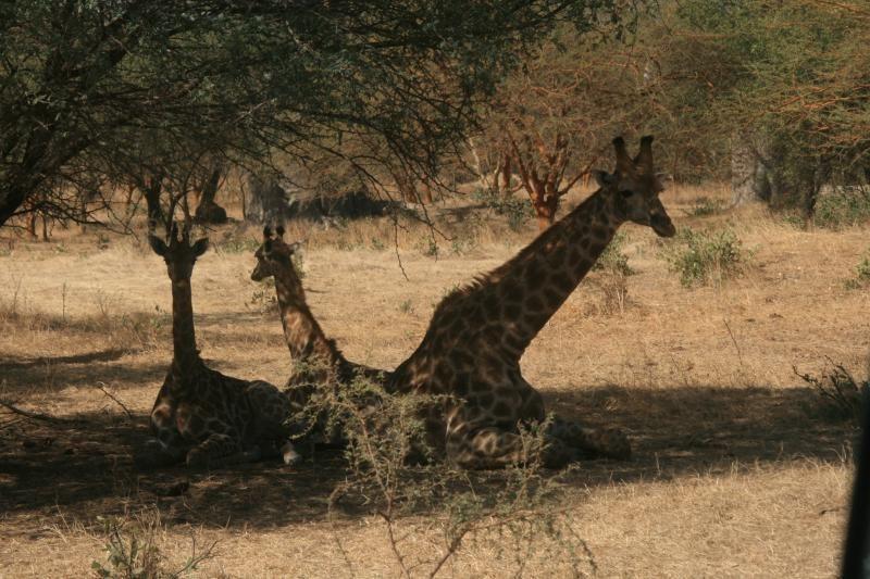 Bandia National Park Tour near Dakar