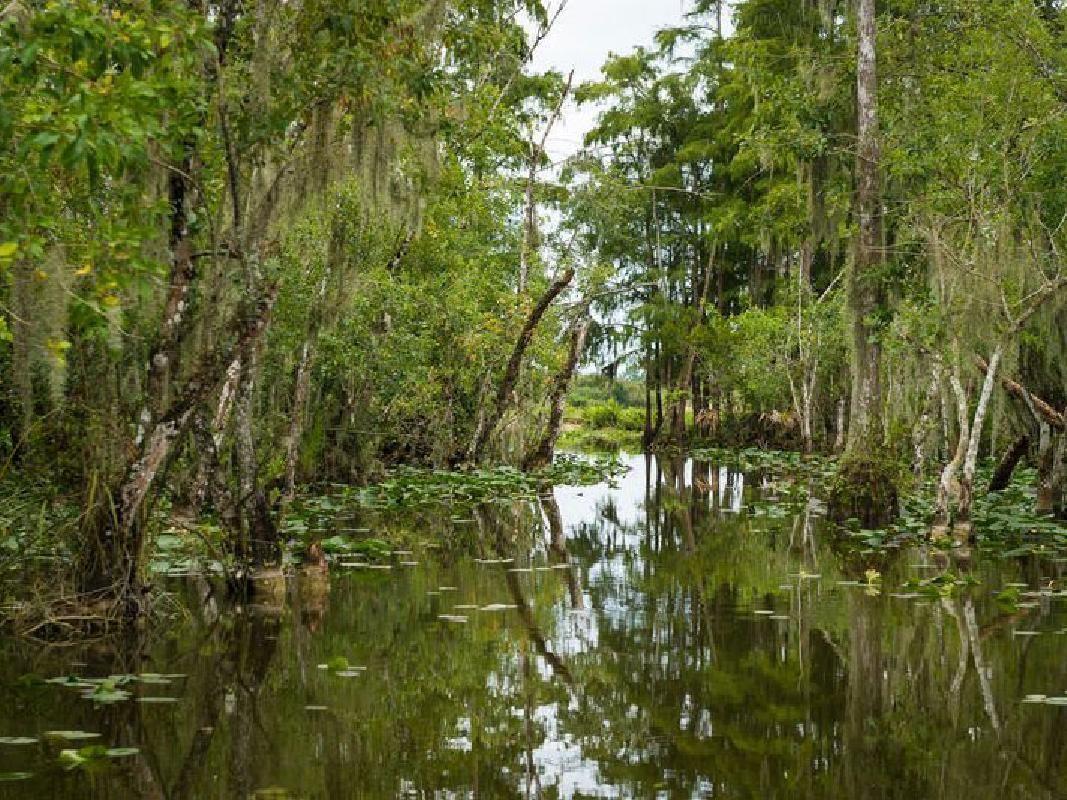 Wildlife Park Animal Keeper Encounter & Everglades Airboat Ride