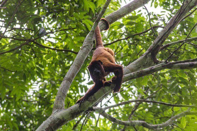4-day Tambopata Ecolodge Rainforest Encounter Tour