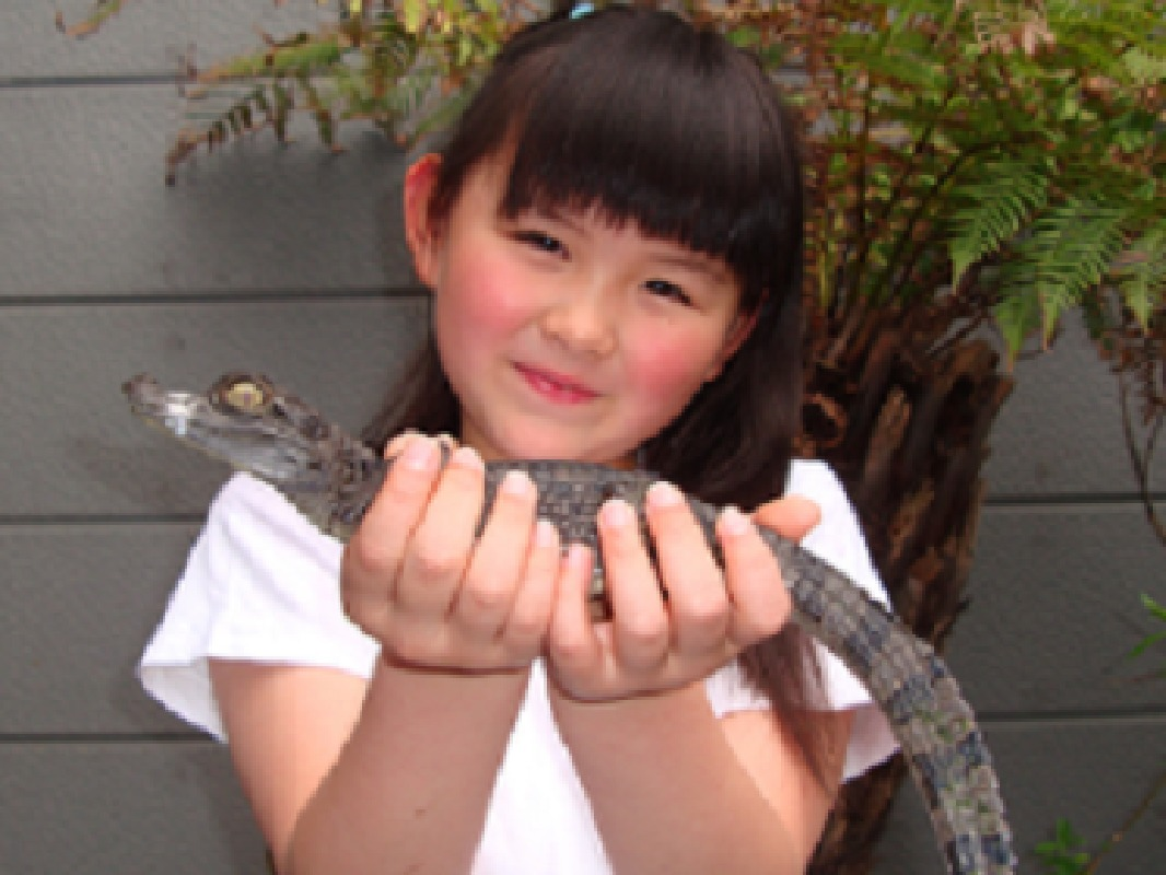 Entry Ticket to iZoo Interactive Reptile Park in Izu