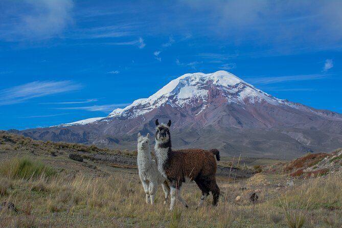 Quito to Cuenca via Avenue of the Volcanos Tour 5-Day tour