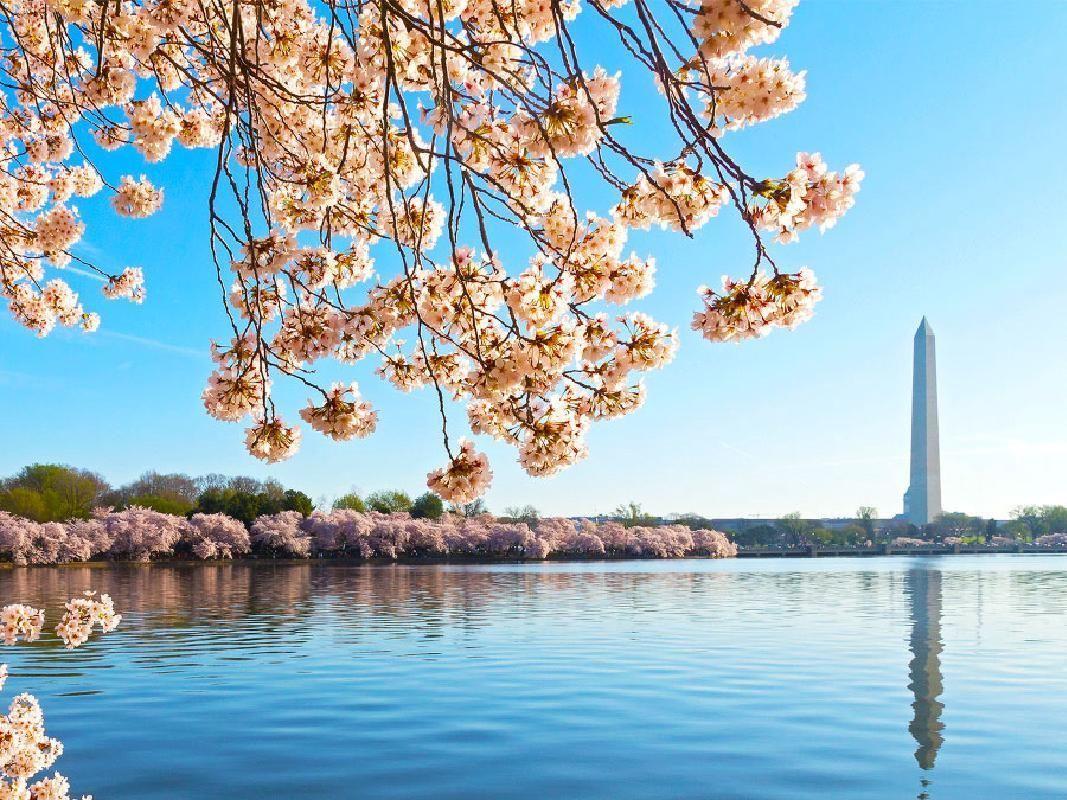 Washington DC Cherry Blossom Festival Guided Segway Sightseeing Tour