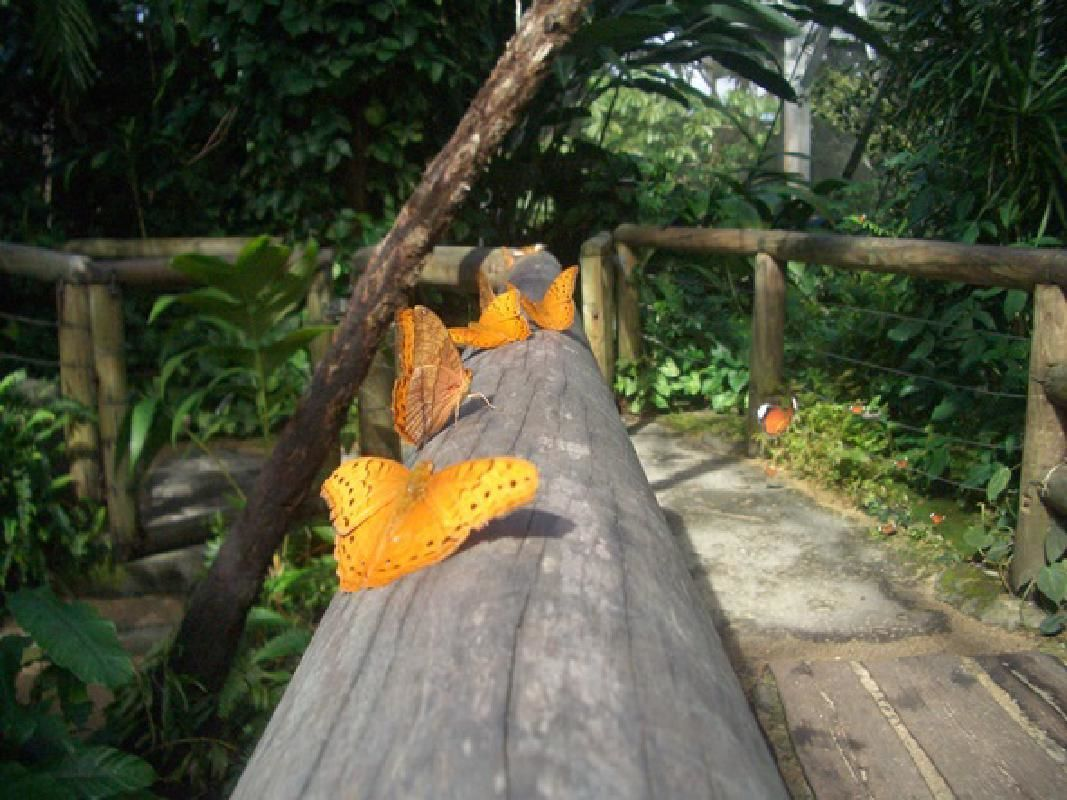 Australian Butterfly Sanctuary Admission Ticket with Exclusive Laboratory Tour