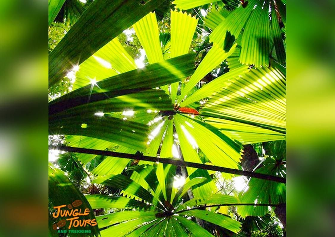 Cape Tribulation and Daintree Tour with Jungle Surfing Zipline Experience