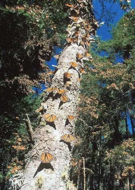 Day trip: The Fluttering Monarch Butterflies in Mexico