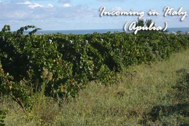"""4 Hour Wine tour in a typical """"Masseria"""" from Bari"""