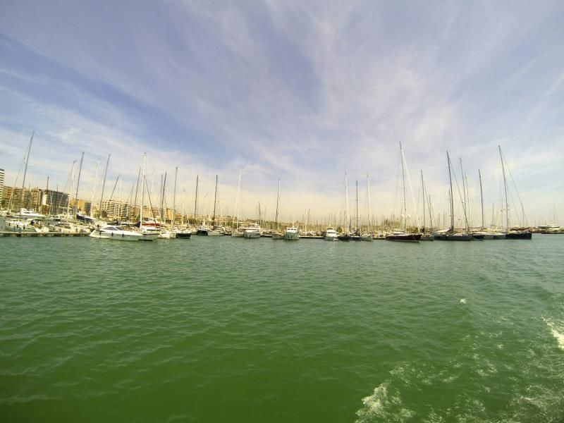 One hour boat trip in the bay of Palma