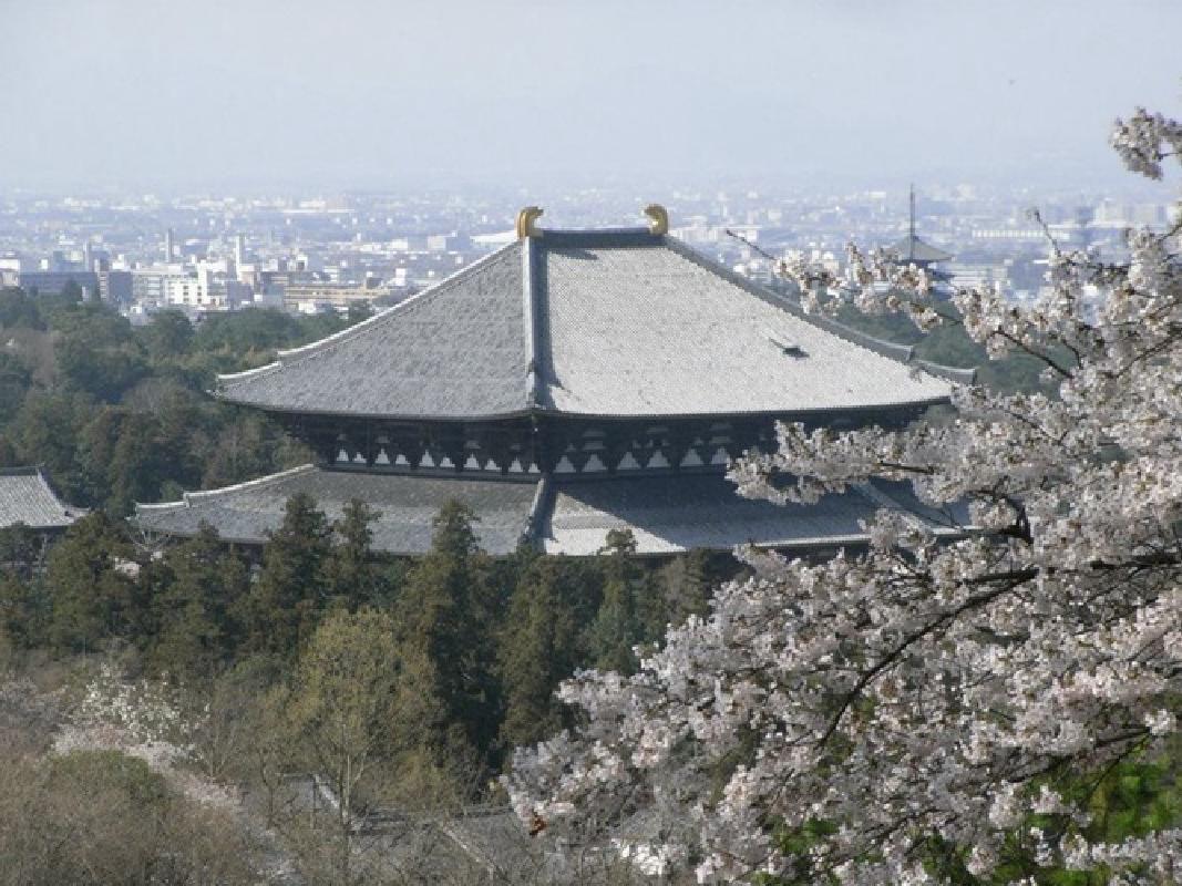 Six Hour Sightseeing Taxi Tour to Horyuji Temple and Nara Park from Nara