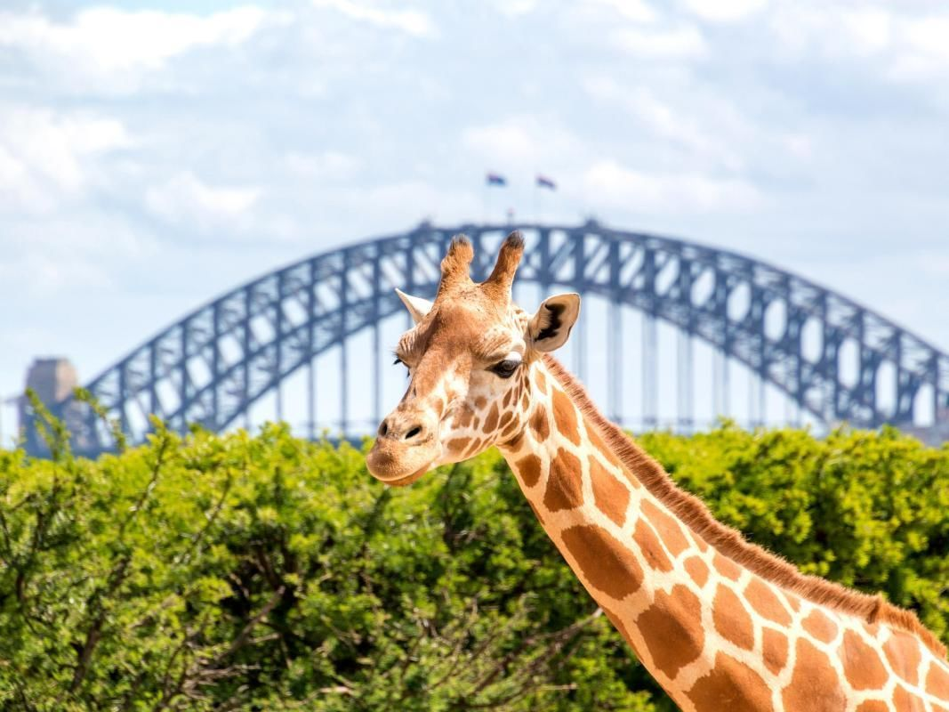 Taronga Zoo by Ferry from Sydney Harbour