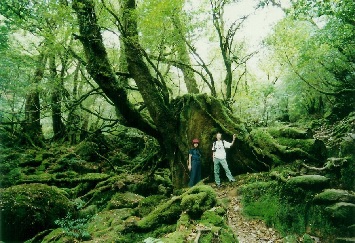 Shiratani Unsuikyo Forest Trekking Course in Yakushima