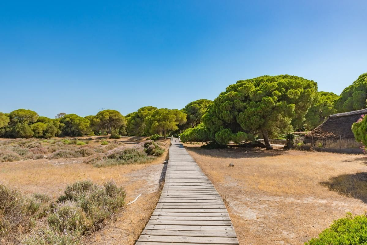 Donana National Park Day Tour from Seville with 4WD Tour and El Rocio Visit