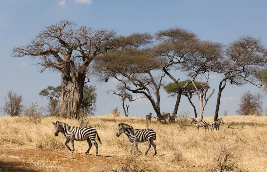 Best of Kenya and Tanzania