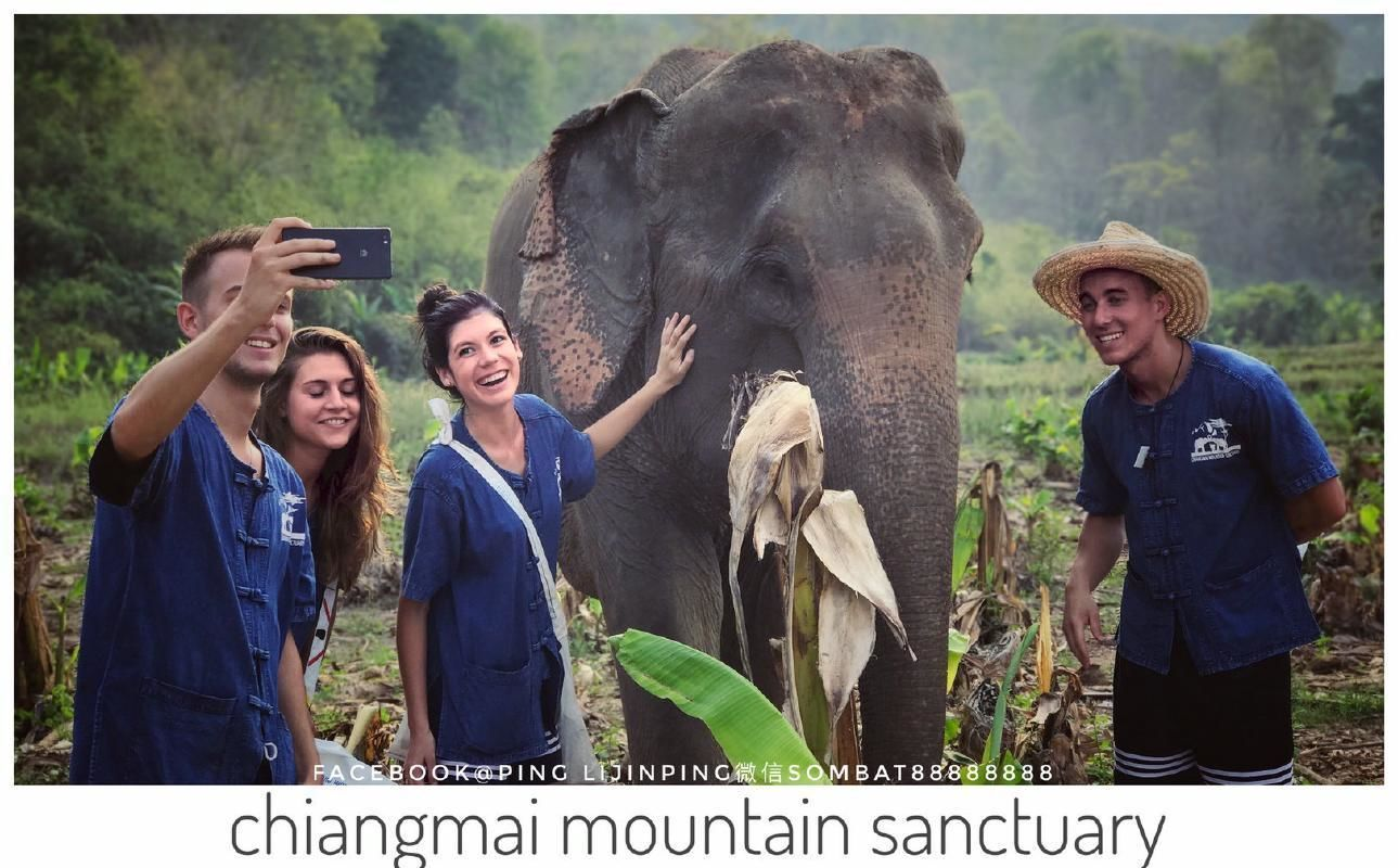 Chiang Mai Full Day Elephant Experience with Sanctuary Tour