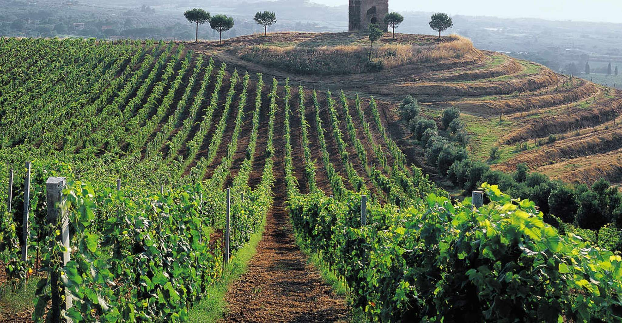 Rome: Private 3.5-Hour Castelli Romani Wine Tasting Tour