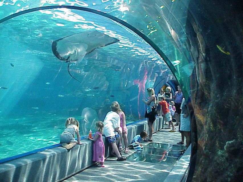 Hawaii: Maui Ocean Center Full-Day Entrance Ticket