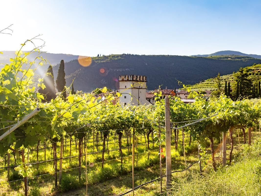 Verona and Amarone One Day Tour from Venice including Wine Tasting