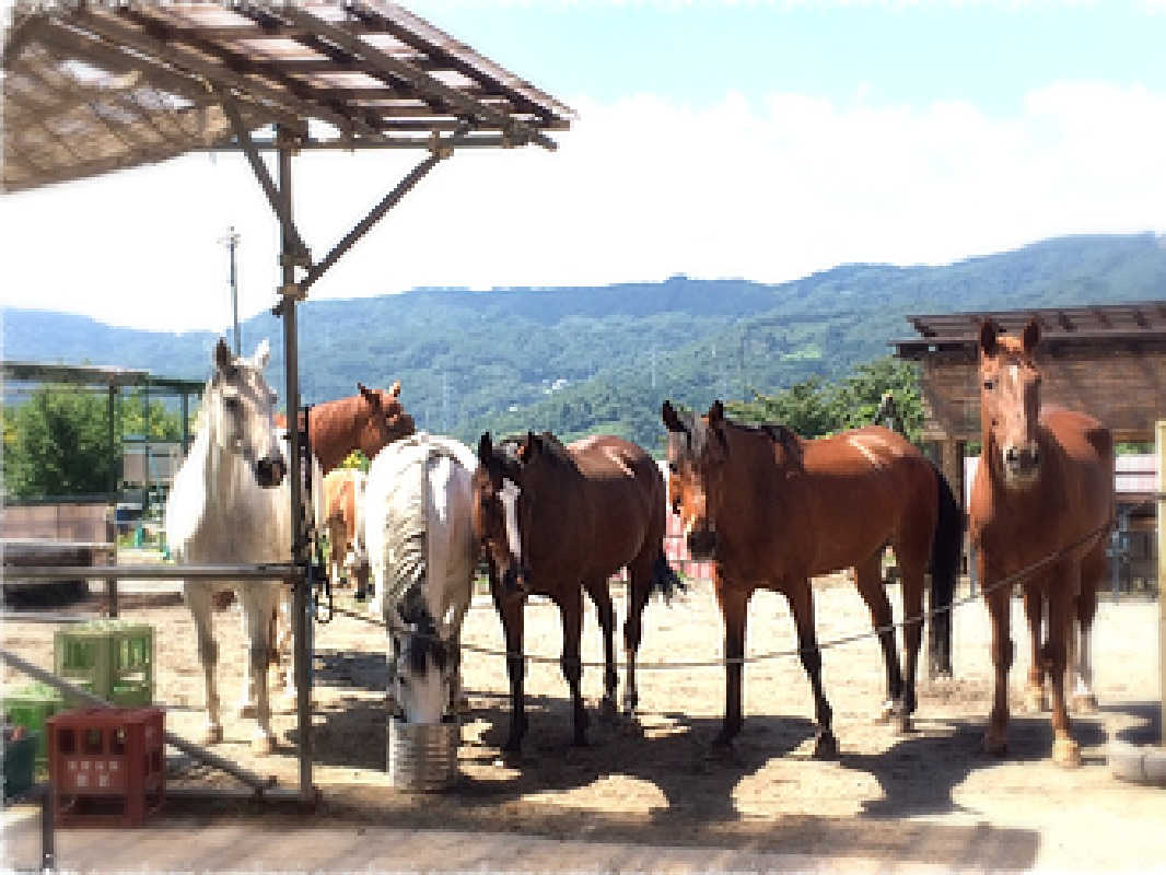 Blue Moon Hill Farm: Learn the basics of horse riding and go into the forest