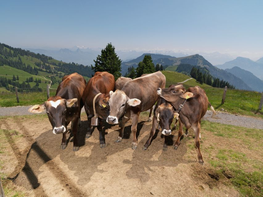 Classic Rigi Round Trip from Lucerne