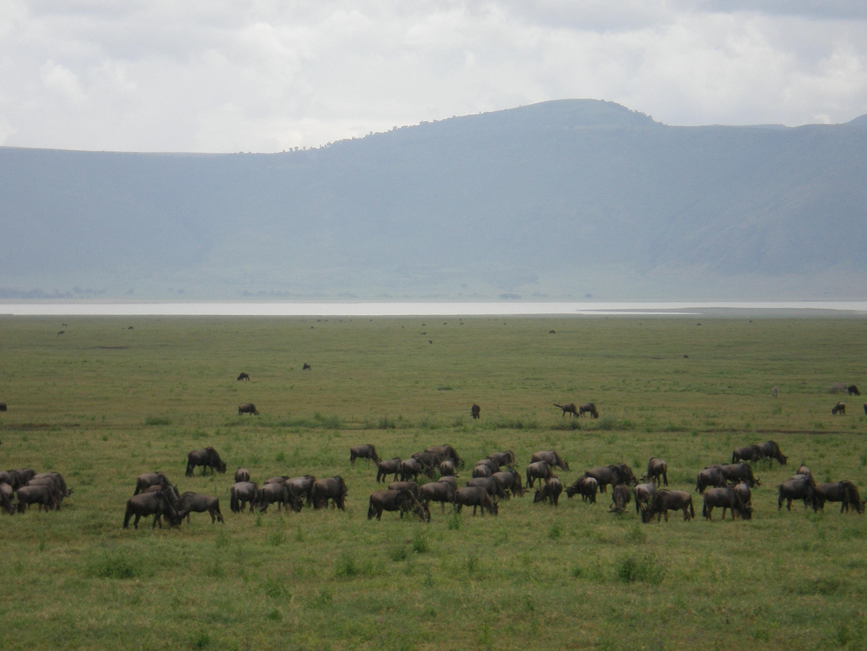 5 DAYS Camping Tour: Lake Manyara, Serengeti, Ngorongoro Tarangire & Visit a Masai Village