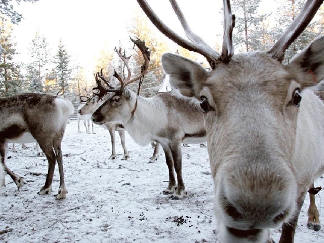 Lapland Santa Claus Village Day Tour from Rovaniemi